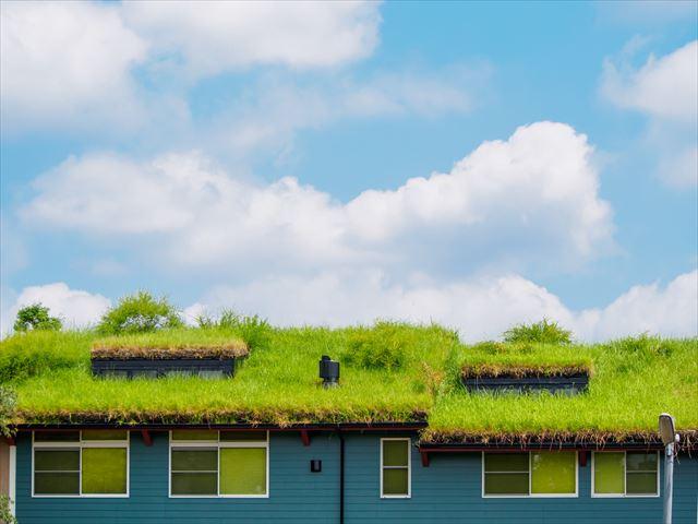 屋上緑化のメリットと注意すべきポイントとは